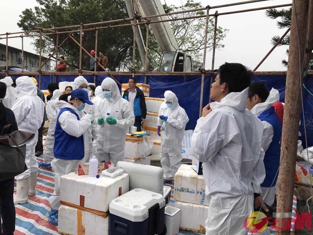 專家組對抹香鯨進行解剖 記者郭若溪攝
