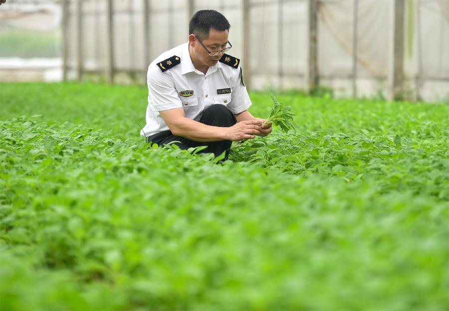在東莞出入境管理局工作人員檢測供港蔬菜質量