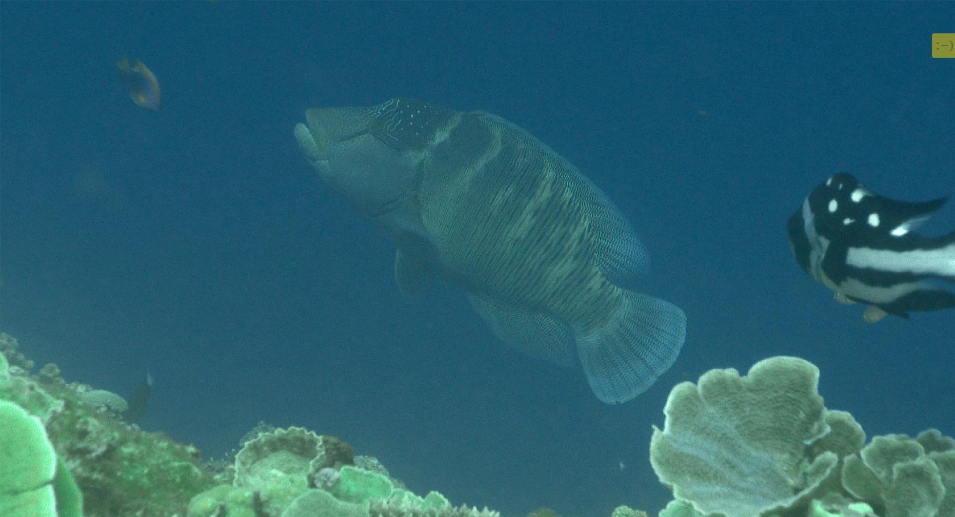 前往南沙群岛中的太平岛海域进行水产资源调查,太平岛海底生态透过