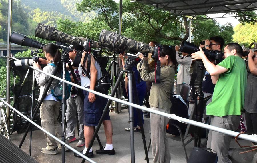 攝影愛好者在余志標家的樓頂上拍攝鳥類