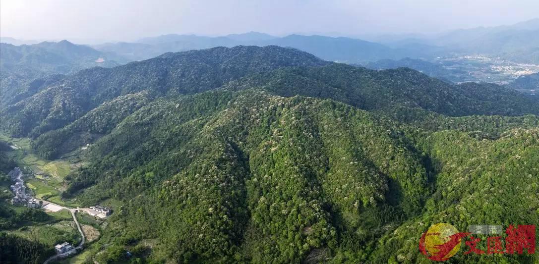 康禾温泉国家森林公园所处的康禾镇,要创建成森林旅游特色小镇.