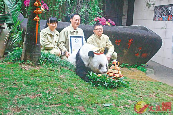 海峽(福州)大熊貓研究中心今年1月為「巴斯」舉行37歲慶生活動(蘇榕蓉 攝於2017年1月18日)