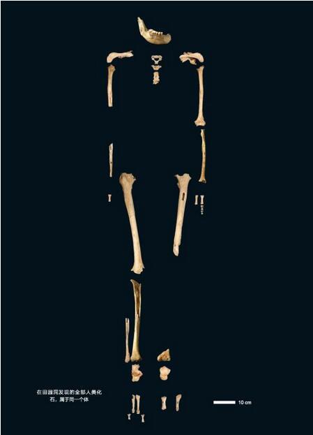田園洞人骨架圖
