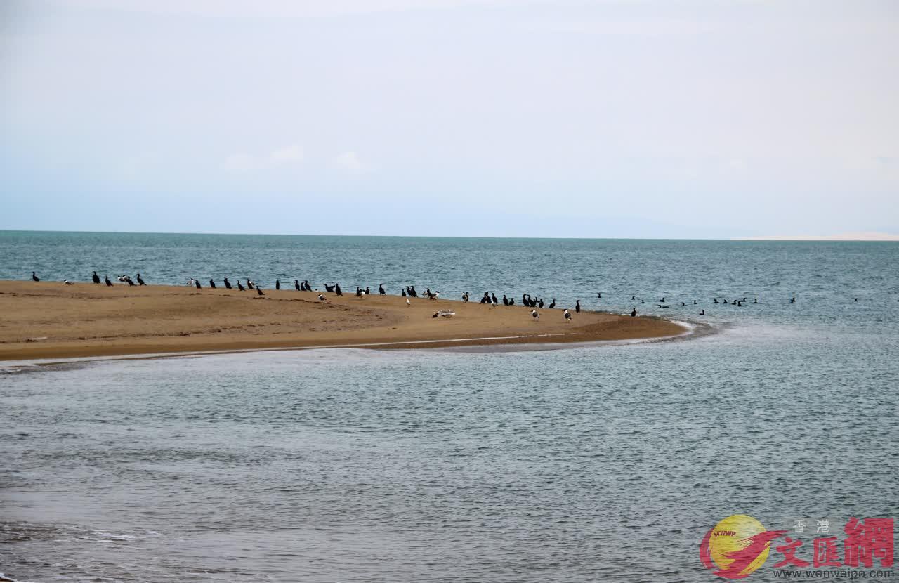 中國最大的內陸湖與鹹水湖——青海湖(記者唐瑜攝)