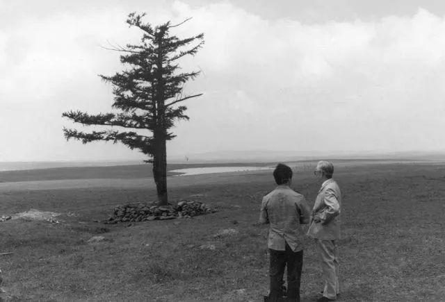 1961年,專家在考察荒蕪的塞罕壩時發現這棵年逾200歲的「功勳樹」,成為「塞罕壩能種樹」的標誌。
