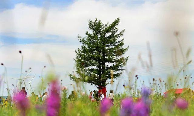 2017年7月12日拍攝的「功勳樹」。