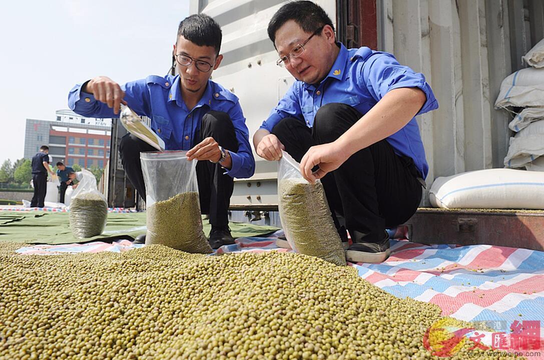 該批烏茲別克斯坦綠豆正在進行開箱查驗