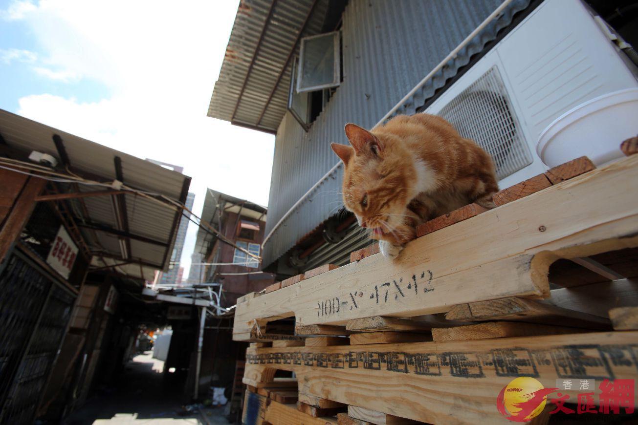 午後的香港油麻地果欄很是安靜,小貓在貨架上休息