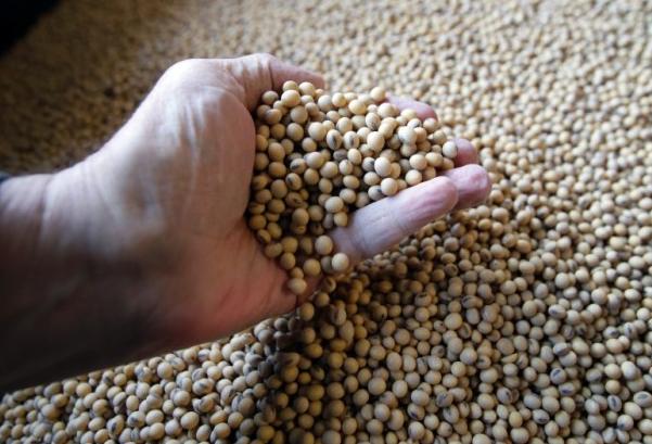 中國累計取消約61萬噸的美國大豆訂單(美聯社資料圖)