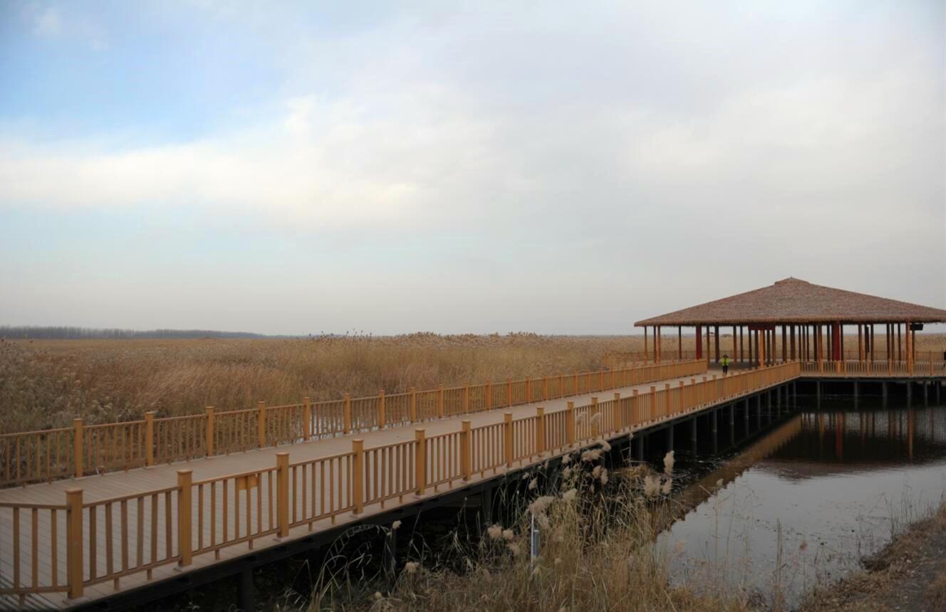 雄安新區成立前夕修建的水上棧道,讓遊人以一種特別的方式親近白洋澱(記者 顧大鵬 攝)