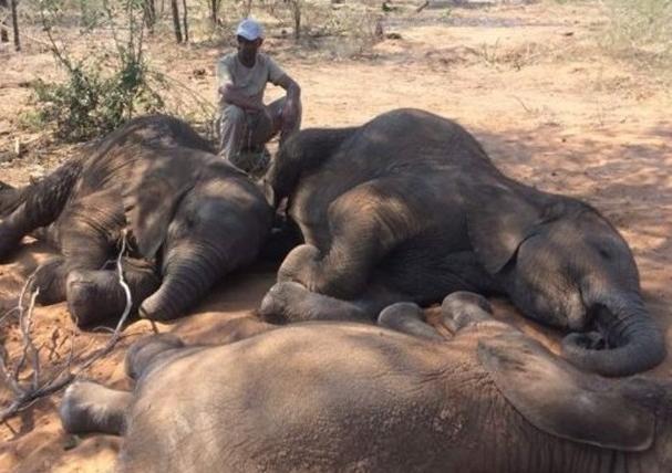 被屠殺的大象屍橫遍野(網絡圖片)