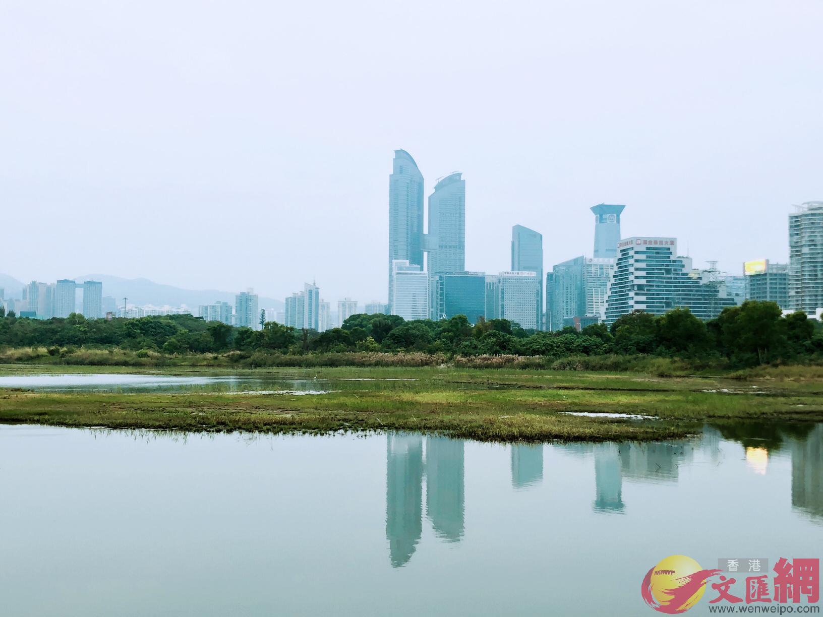 粵港澳大灣區擁有豐富的濱海濕地和水網濕地。(方俊明攝)