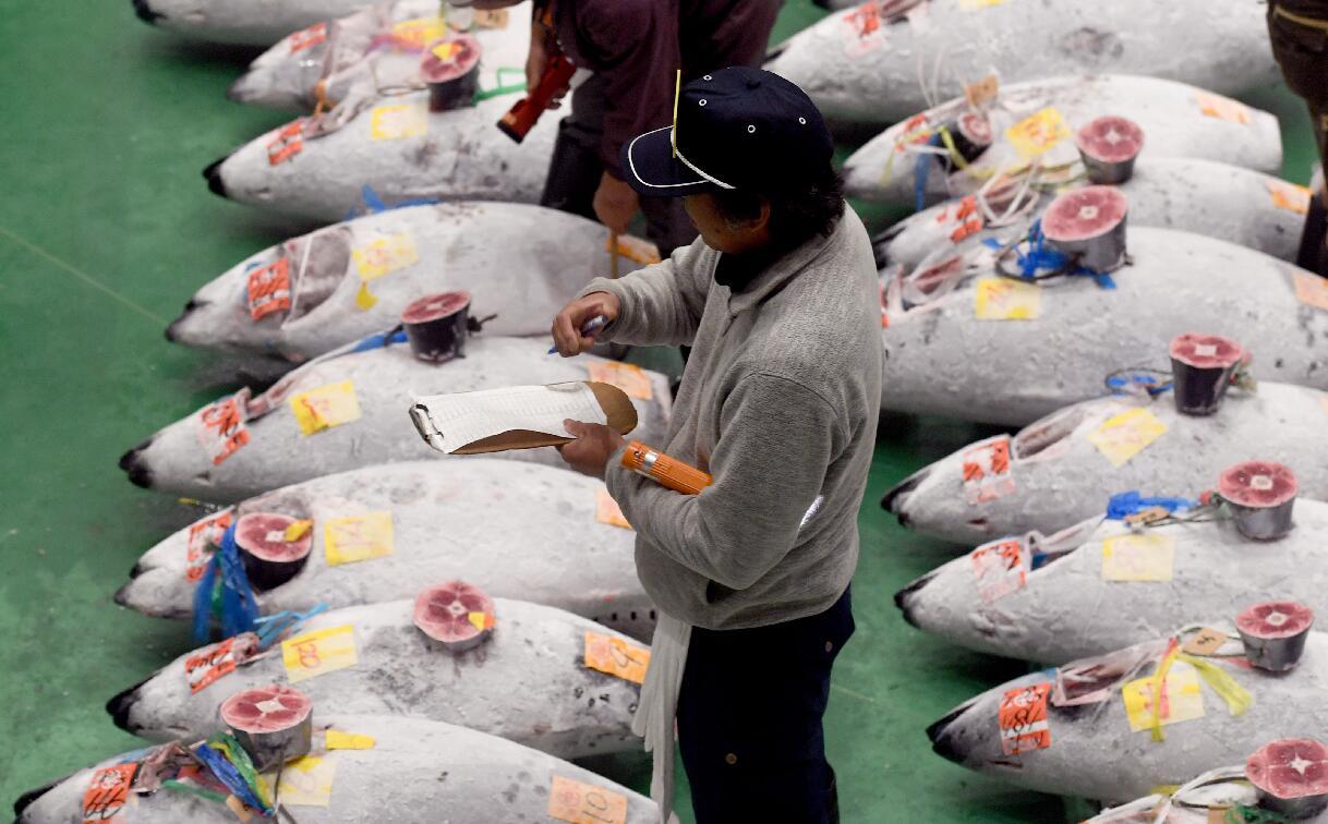 買家在拍賣中檢查吞拿魚。