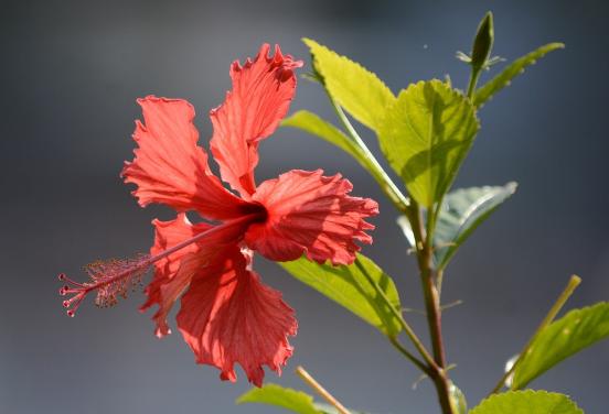 今年的花卉展以大紅花為主題(網絡圖片)