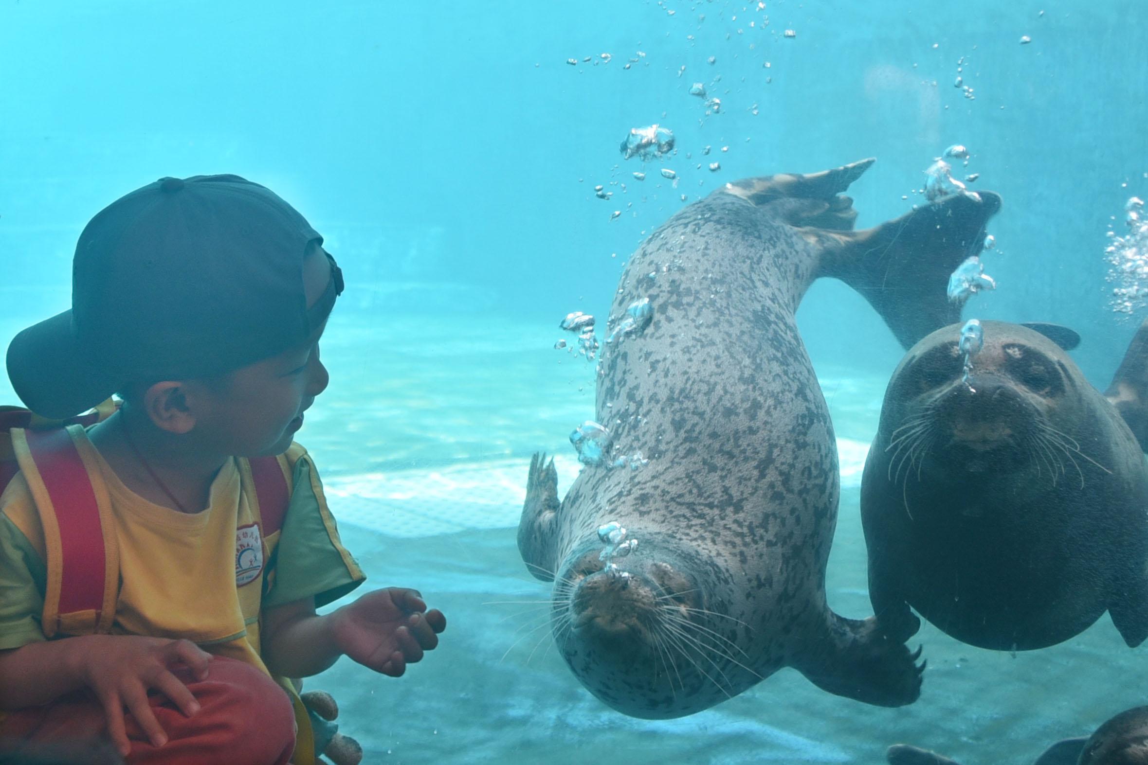 海豹在小朋友面前賣萌
