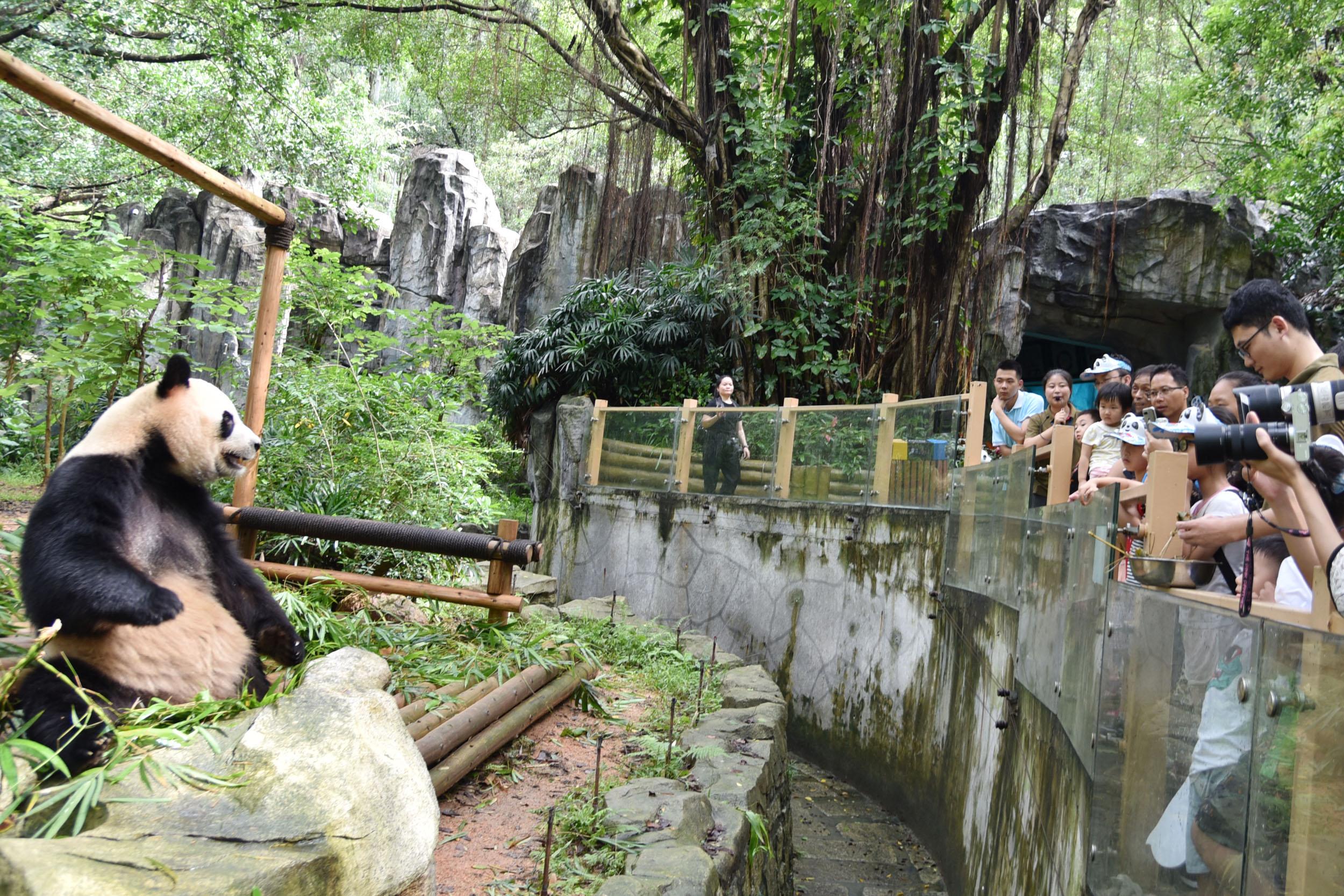 孩子們在親人的陪同下在深圳野生動物園觀看大熊貓