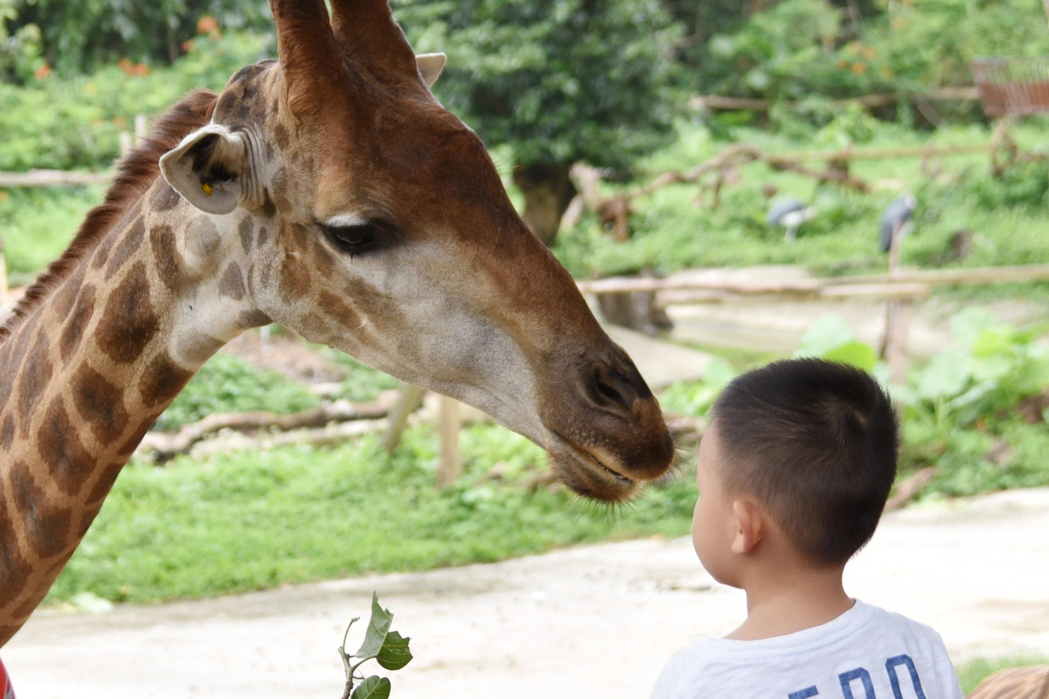 小朋友與長頸鹿面對面