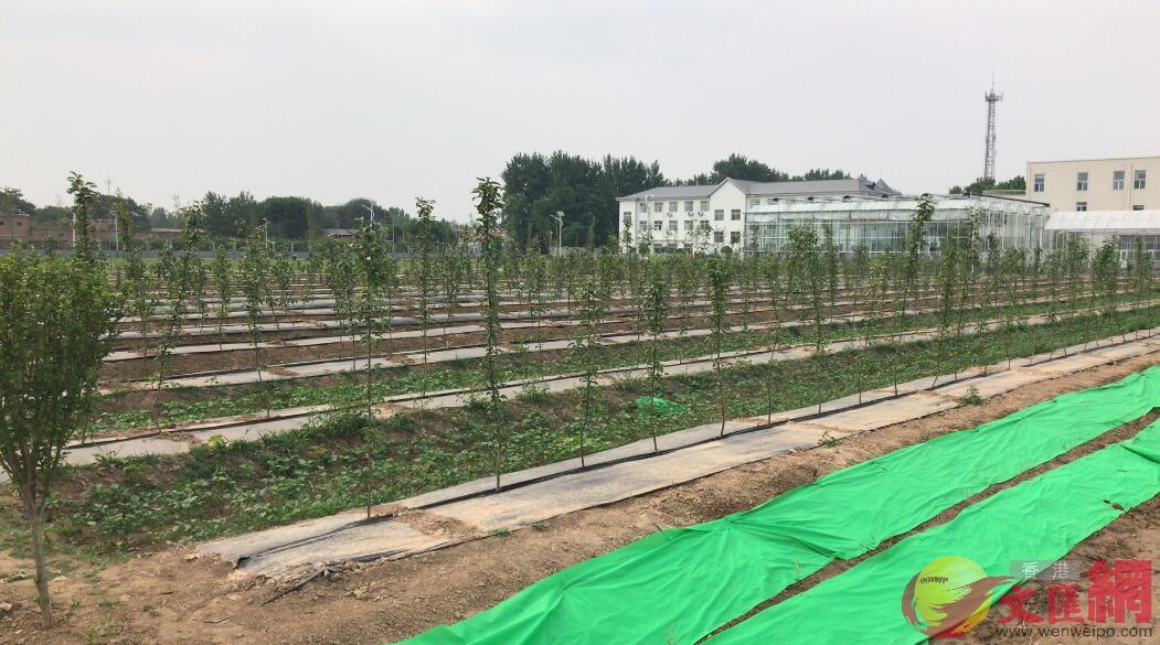 中國農業大學曲周實驗站一角(記者顧大鵬攝)