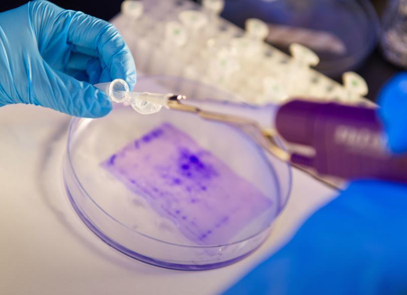 新治療方法可有效激活注入腫瘤的抗癌藥(城大網圖)