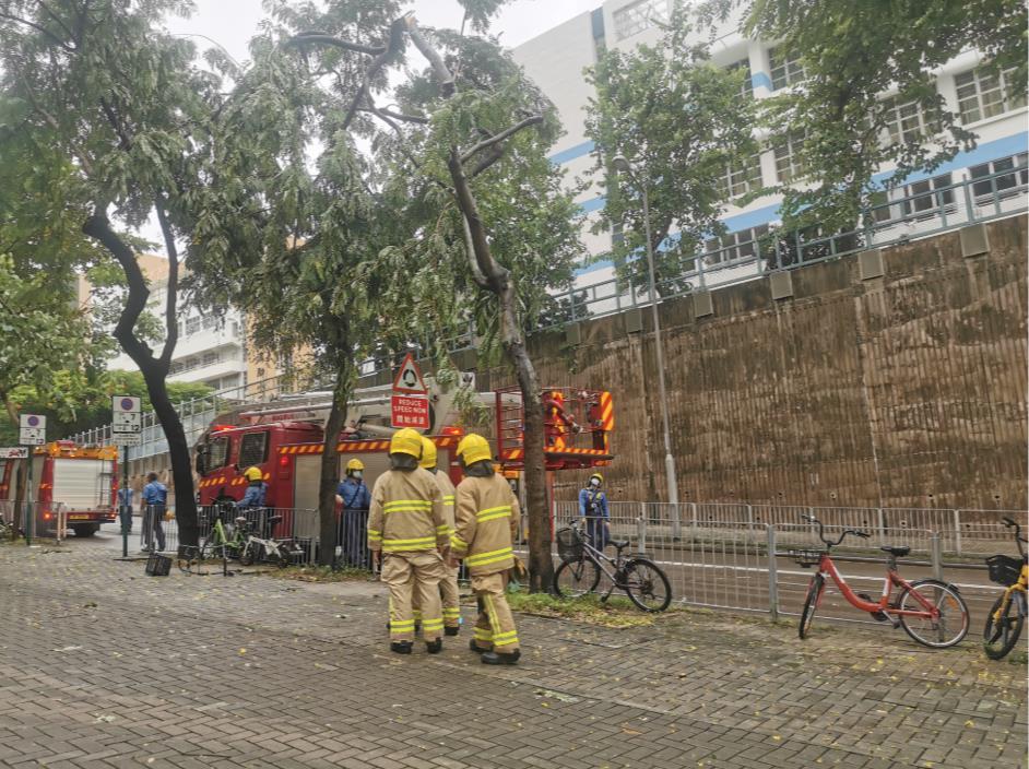 將軍澳彩明街善明邨,路邊一棵樹斷枝搖搖欲墜,消防員到場處理。(大公文匯全媒體中心圖片)