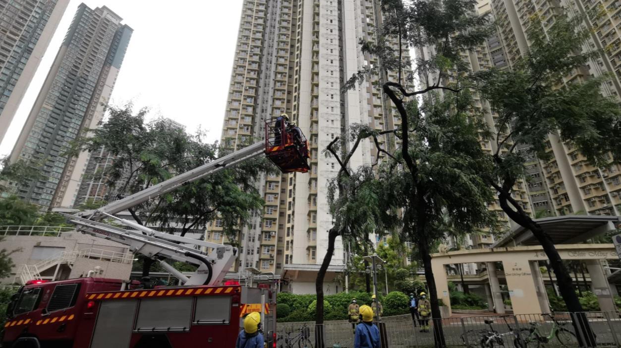 消防員到場正在處理,開動雲梯到斷枝處檢查。(大公文匯全媒體中心圖片)
